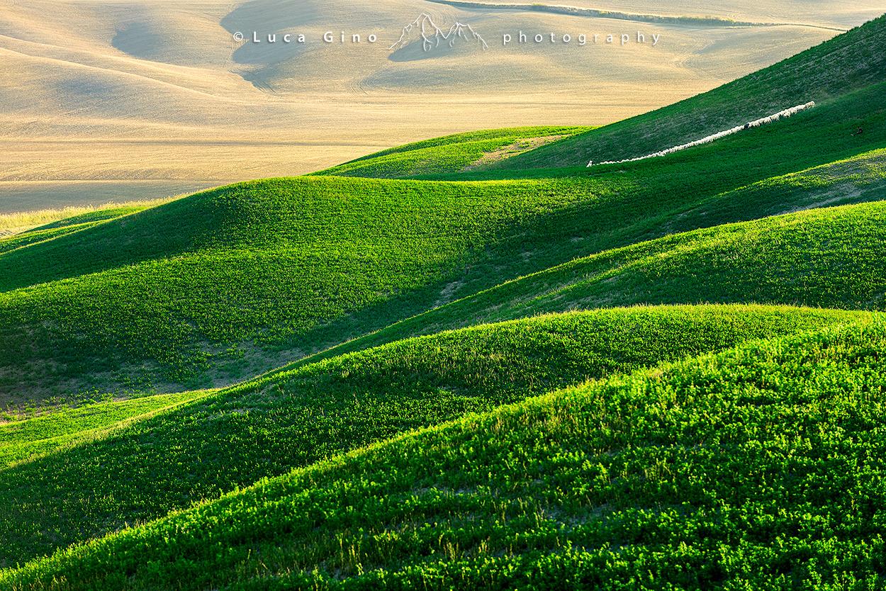 Le morbide colline delle crete senesi