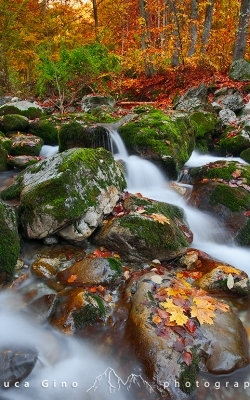 The stream in autumn