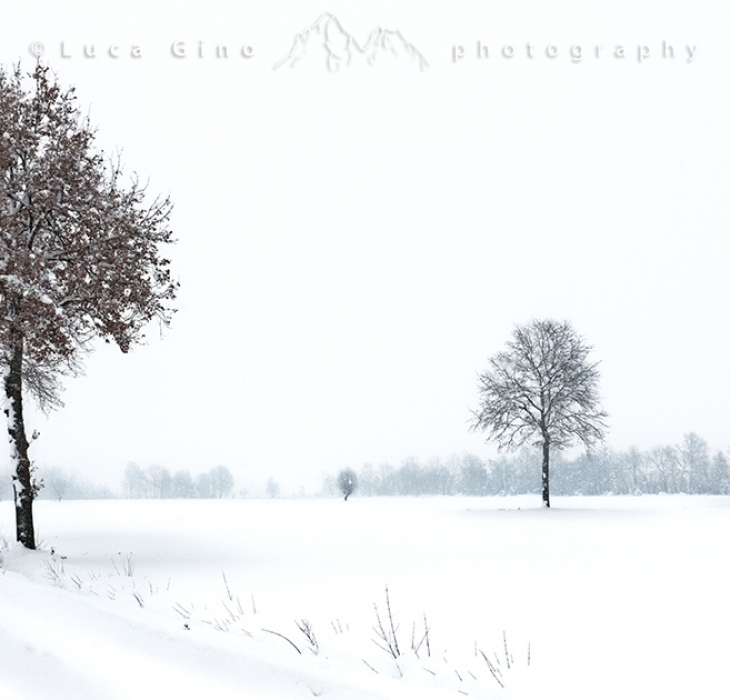 Winter on the plains