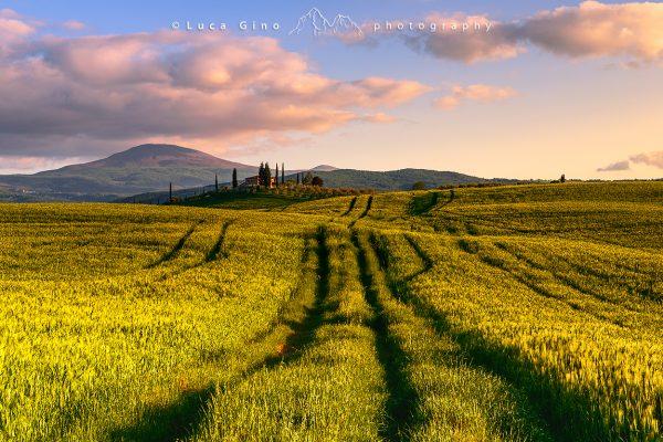 campi di grano al tramonto in val d'Orcia