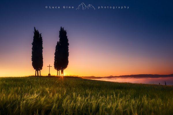 Gruppo di cipressi all'alba e la croce di san Quirico d'Orcia, Val d'Orcia