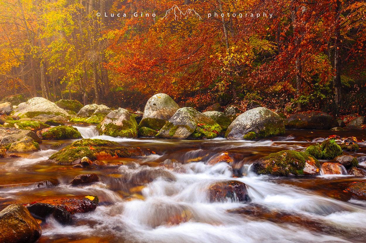 I colori autunnali in valle Pesio, il torrente immerso nel bosco colorato, Piemonte