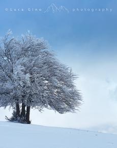 Albero ghiacciato a Castelluccio di Norcia
