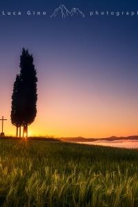 Il gruppo di cipressi e la croce all'alba