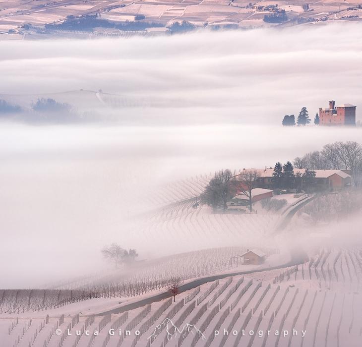 Winter in vinelands