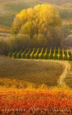 I colori d'autunno nelle Langhe