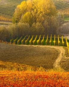 Colori d'autunno nelle Langhe