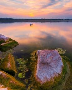 Il Cigno sul lago di Varese