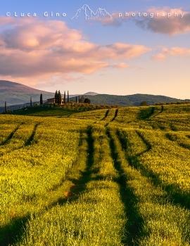 Campi di grano in Val d'Orcia
