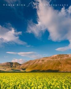 La fioritura della lenticchia di Castelluccio di Norcia